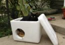 A feral cat shelter box similar to the ones built by volunteers in Krakow