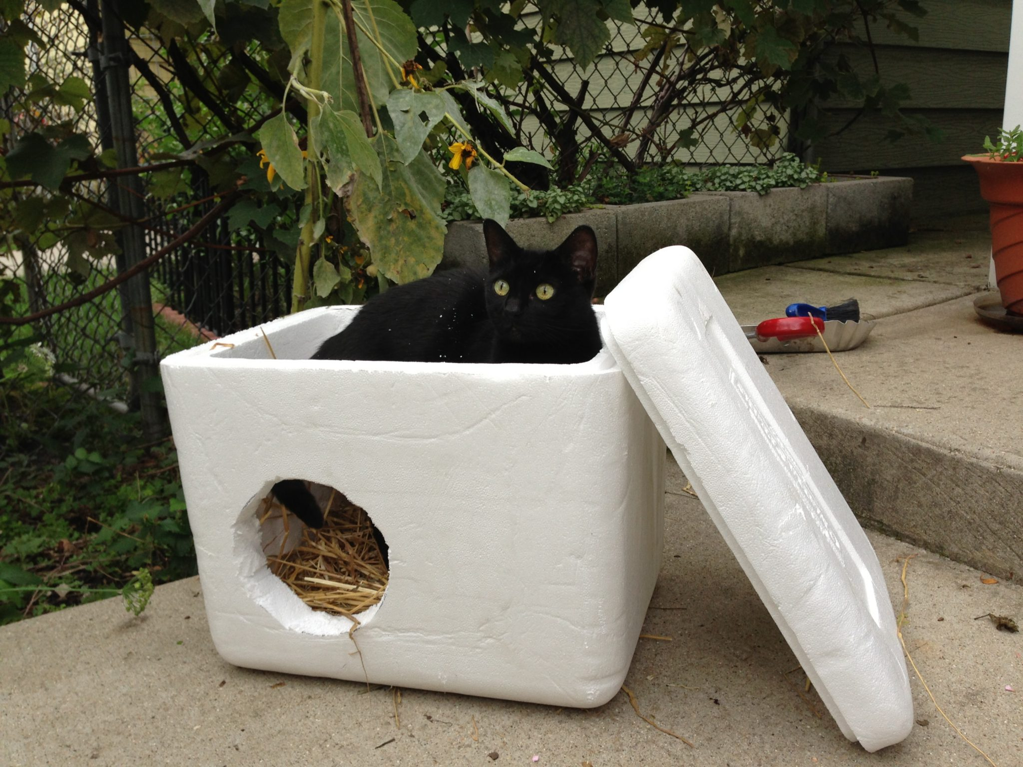 Homemade Cat House Outside