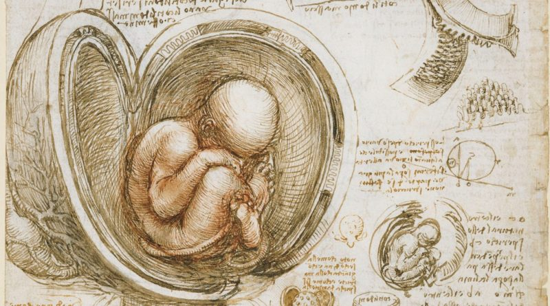 """Studies of the Fetus in the Womb"" (detail) by Leonardo da Vinci (c. 1510-13)"