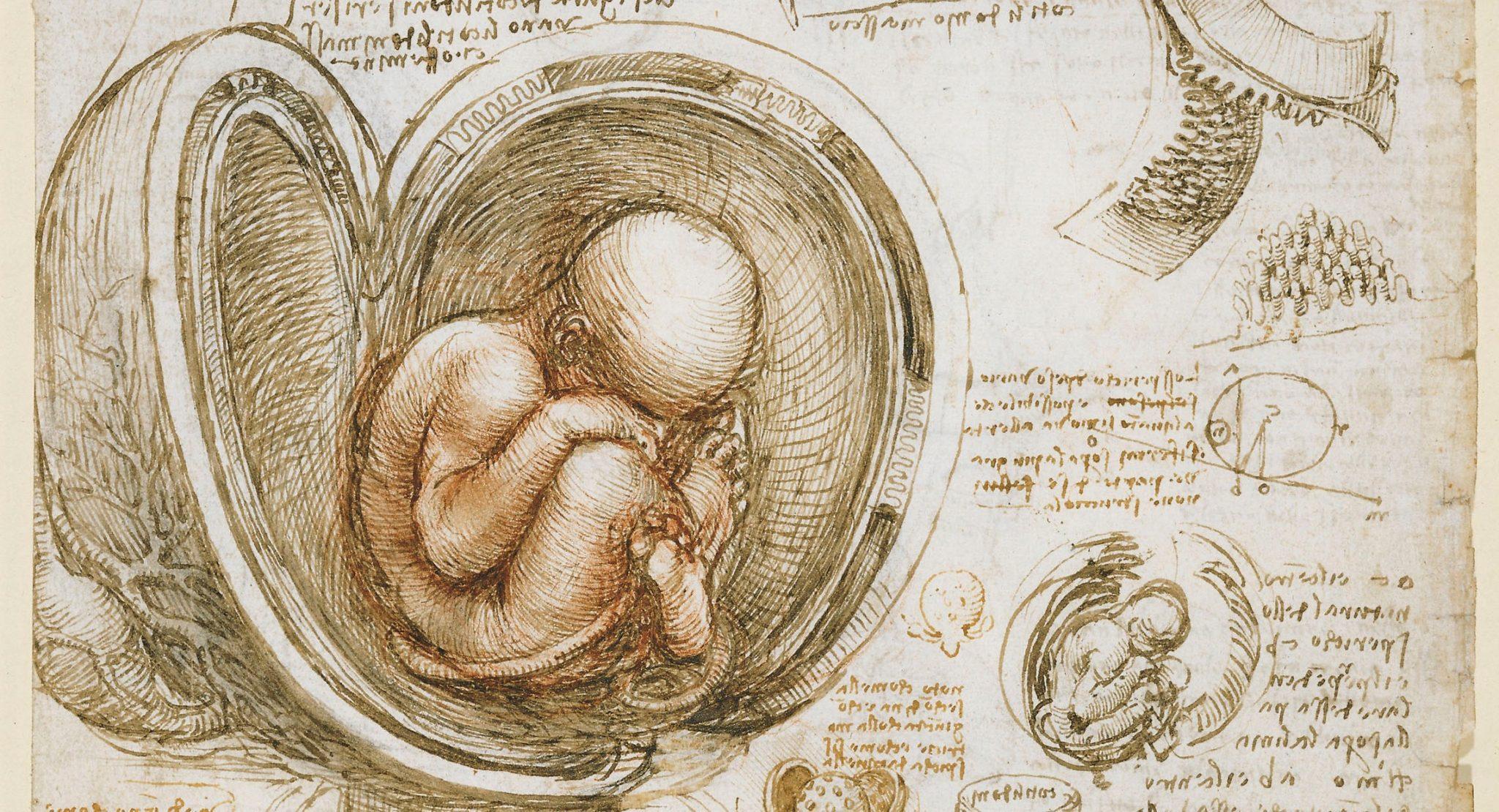 """Studies of the Fetus in the Womb"" (detail) by Leonardo da Vinci (c. 1510-13)"