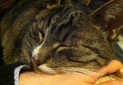 Happy Cat Day! Here's how to adopt (or help) a cat in Krakow