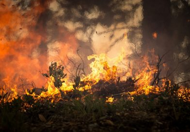 Forest fires rage across Poland as heat wave continues
