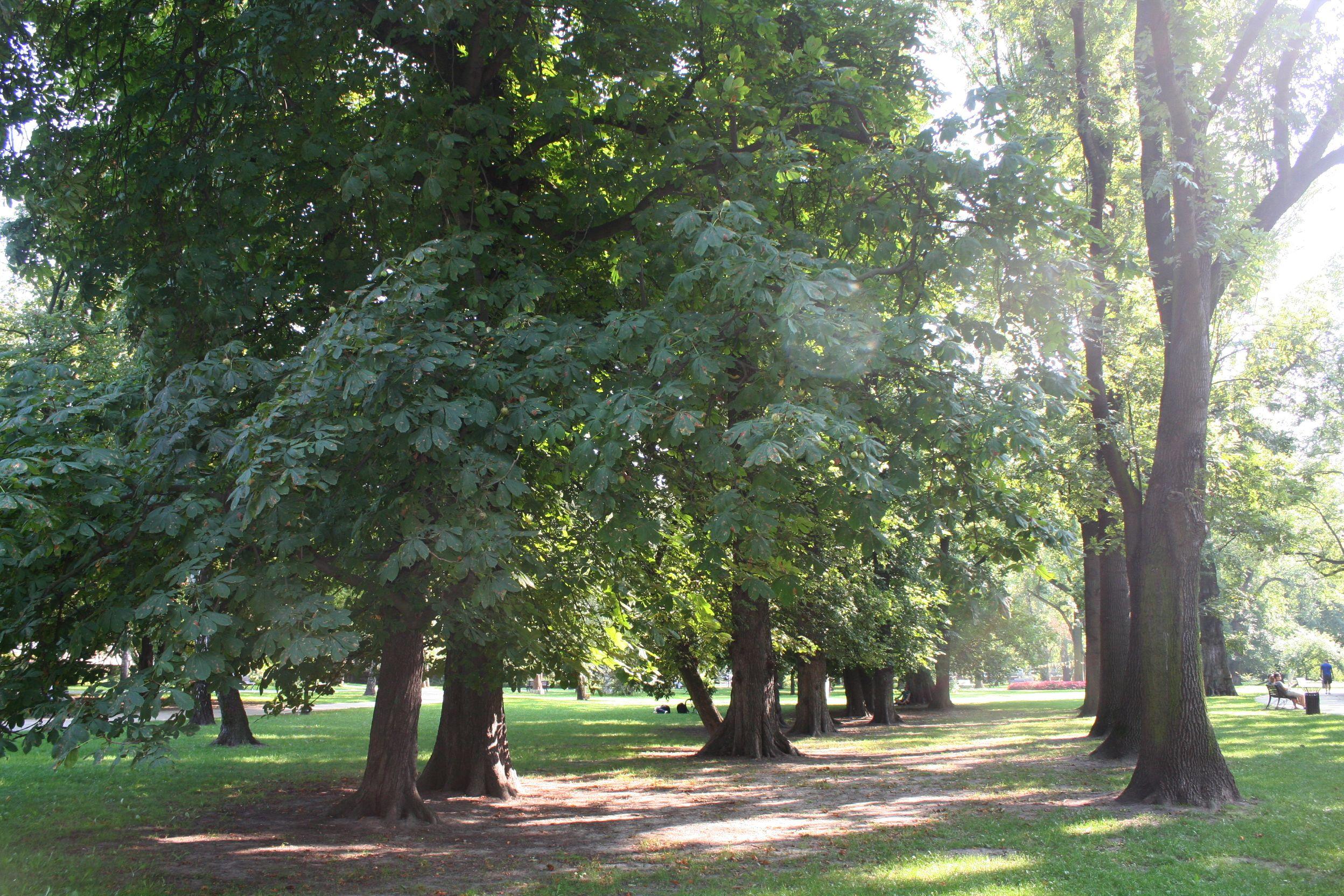 Trees in Park Krakowski, adjacent to Plac Inwalidów
